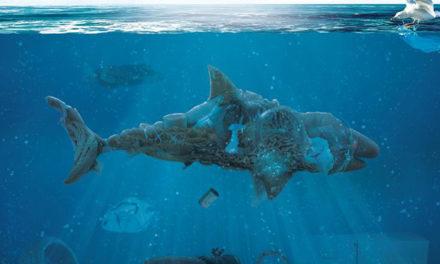 El Festival Internacional de Cine Medioambiental de Canarias llega a Lanzarote